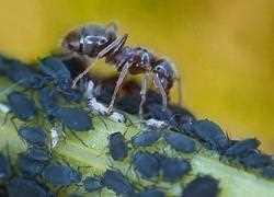 Ameisen Im Garten Ameisenplage Ameisen Bekämpfen So Gehts