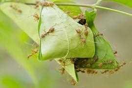 Ameisen Im Garten Ameisenplage Ameisen Bekampfen So Gehts