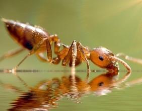 Ameisen im Haus? Infos zur effektiven Ameisenbekämpfung hier!