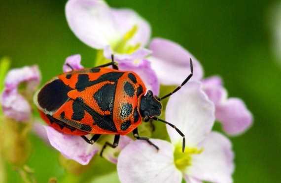 Schädlinge Im Garten Bestimmen Und Bekämpfen übersicht