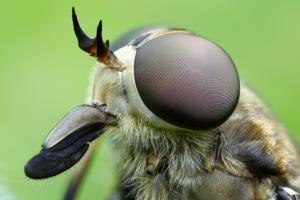 dunkle juckende insektenstiche