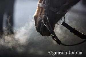hochwirksames fliegenmittel für pferde