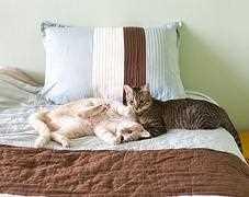 Flöhe Im Bett Entdeckt Flöhe Bekämpfen Aber Richtig