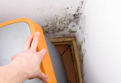 Mauerasseln Und Kellerasseln Bekampfen Alle Mittel Und Tipps