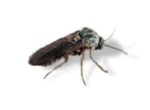 Die Wichtigsten Mückenarten Und Wie Man Sie Bekämpft