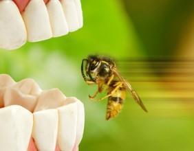 Wespen Vertreiben Und Bekampfen Tipps Zur Wespenbekampfung